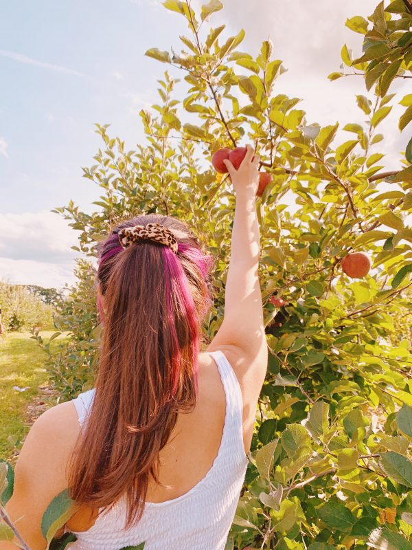 Stacey Lee Apple Picking